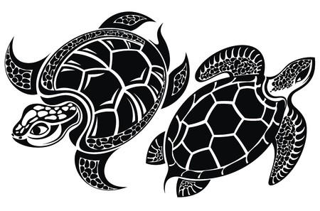 water turtle: Turtle