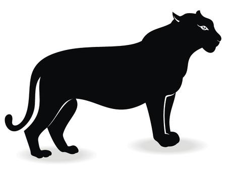 puma cat: Cougar
