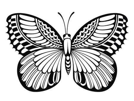 butterfly isolated: Butterfly