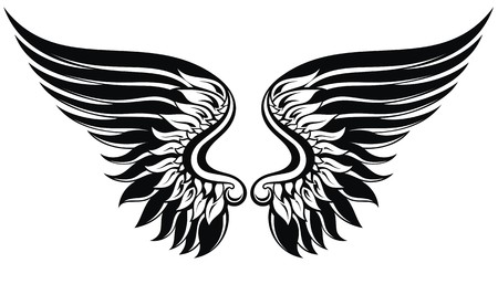 wings vector: Vector wings illustration