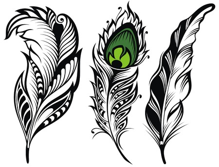 plume: Vector isolated feathers.Peacock feather