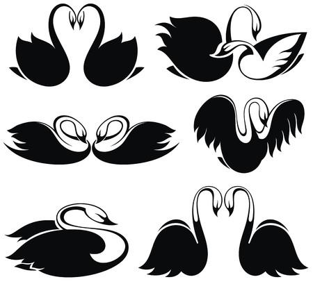 swan pair: Black swan
