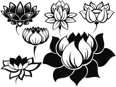 flor de loto: Conjunto de flores de loto