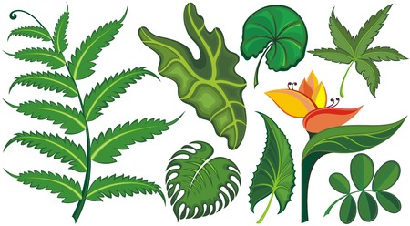 philodendron: Set of tropical leaves and flowers Illustration