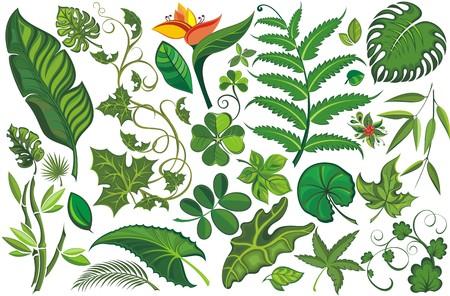 jungla: Conjunto de hojas tropicales Vectores