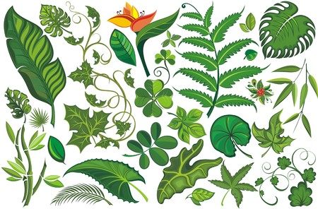 jungle: Set of Tropical Leaves