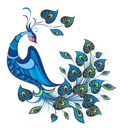 peacock: Peacock bird Illustration