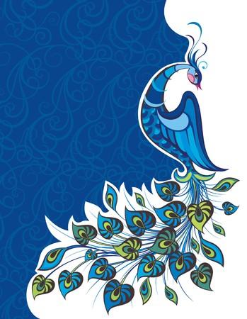 peacock feathers: Pavo real colorido decorativo