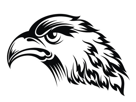 hawks: Realistic eagle head