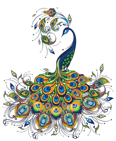 Illustration of peacock drawing on white background
