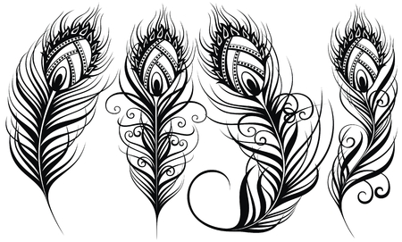 Peacock feathers. Exotic bird feathers Illustration