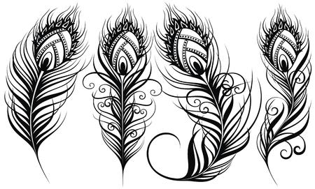 Plumes de paon. Plumes d'oiseaux exotiques Vecteurs