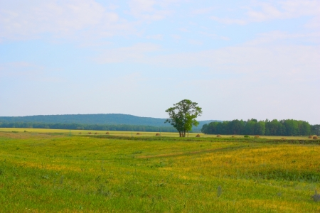 Beautiful summer landscape with green field and tree