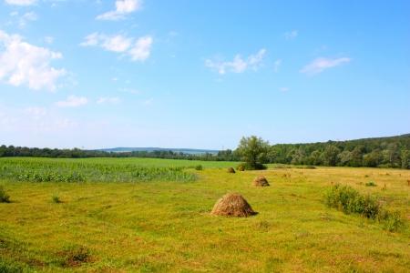 Beautiful summer village landscape