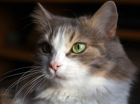 Pretty cat on the dark background Stock Photo