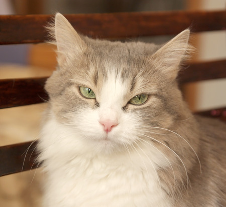 Pretty cat on the blurred background photo