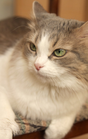 Pretty cat on the blurred background