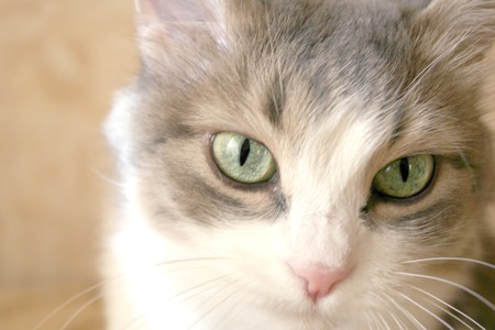 Pretty cat on the light background
