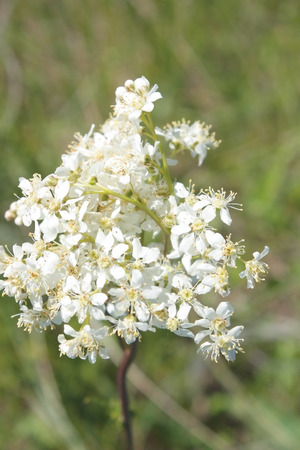Blossom white flowers on the field, shallow depth of image definition