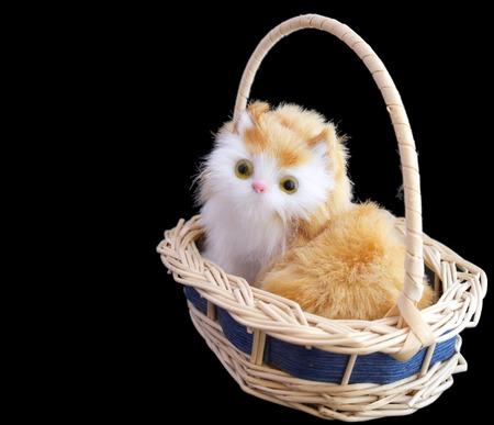 Pretty kitten in basket over black