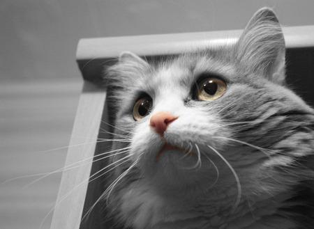 Pretty cat indoor Stock Photo