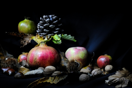 autumn fruit Stock Photo - 16374303