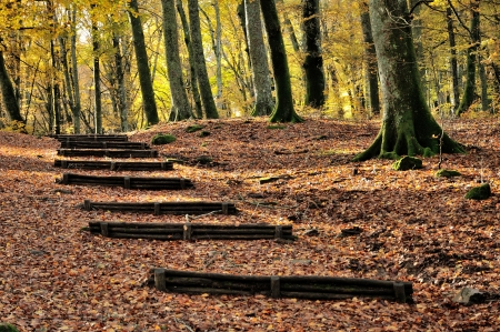 autumn forest with wooden stairs photo