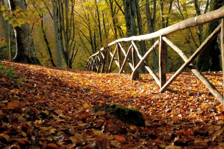 autumn forest and old fance