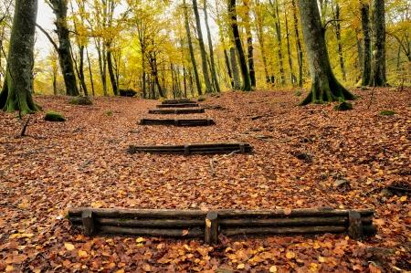 herfst bos met houten trap Stockfoto
