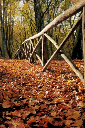 appalachian trail: autumn forest and old fance
