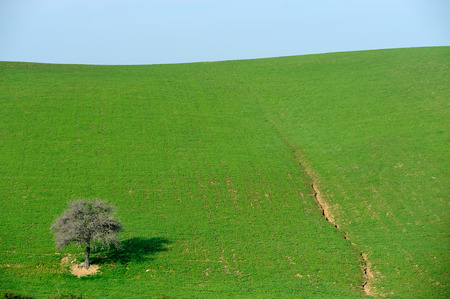 tree alone in the country field photo