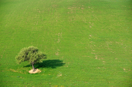 tree alone in the country field