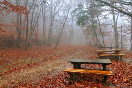 autumn leaves in foggy morning Stock Photo