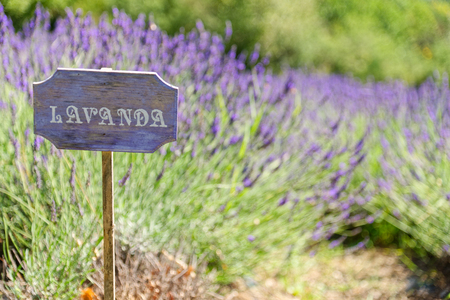 lavender cartel italian country Stock Photo