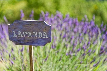 lavanda: lavender cartel italian country Stock Photo