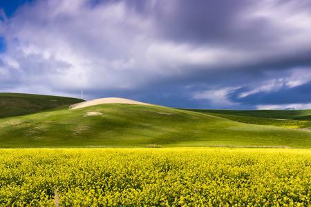 spring dandelion fields and blue sky