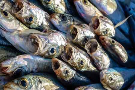 Close up of fish at market