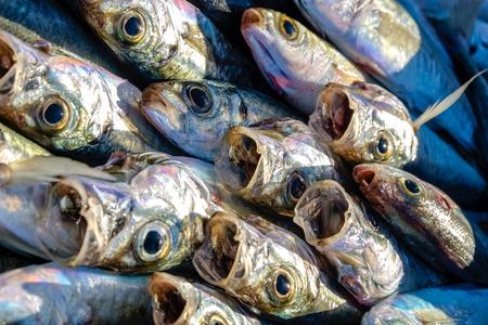 close up of fish at market Stock Photo