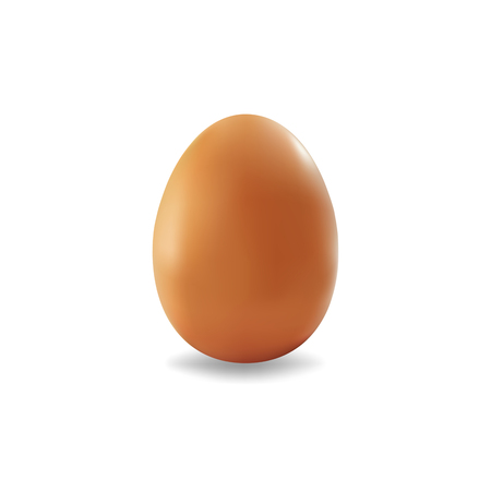 brown egg: brown egg isolated