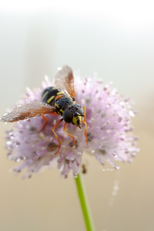 wet insect on a flower photo