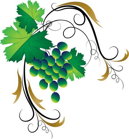 Decorative grapevine on a white background Illustration