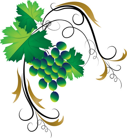 Decorative grapevine on a white background Illustration