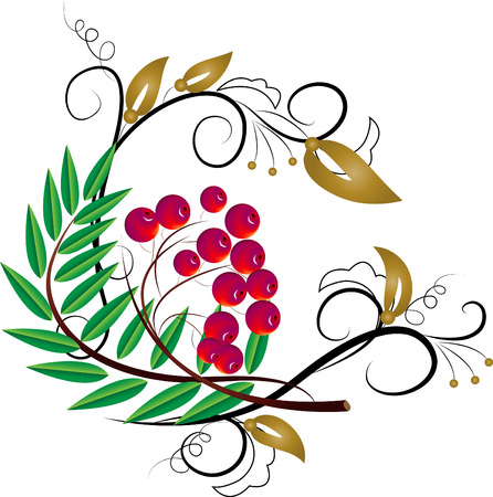 Mountain ash red with a vegetative ornament Stock Vector - 6122583