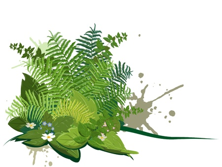 Composite of forest plants on a white background
