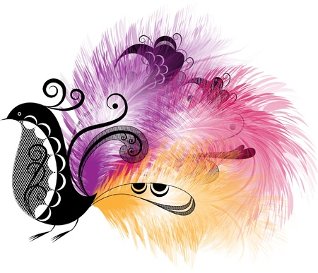 Decorative bird in black and white with a beautiful tail of colored feathers Stock Vector - 18379304