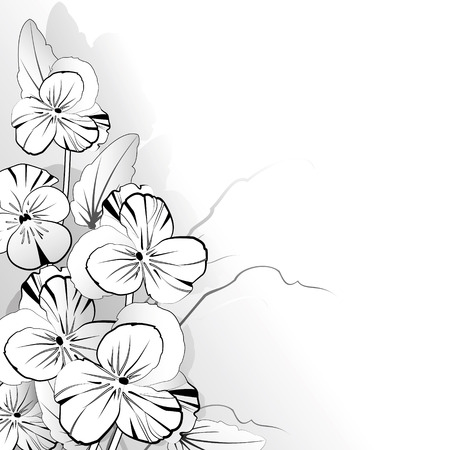 pansy: Pansy in black and white on a light background