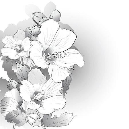 white flowers: Mallow flowers in black and white. Vector illustration