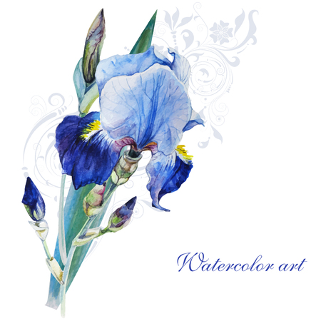 Blue iris watercolor painting on white background handmade