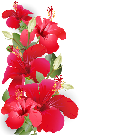 Bouquet with hibiscus flowers of red color on a white background