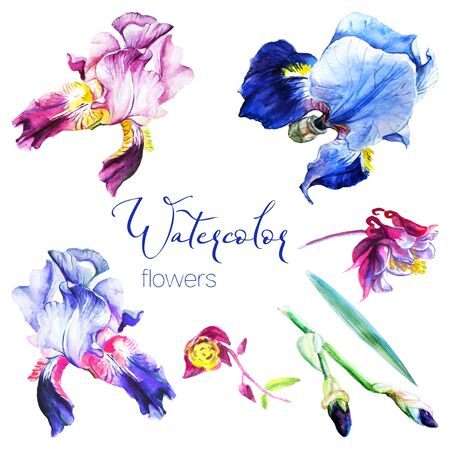 Set of watercolor flowers irises and wild flowers for design on white background.